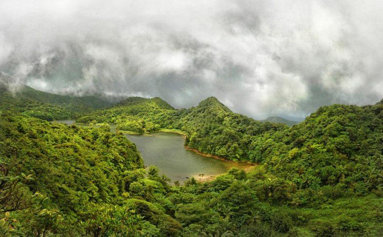 Rainforest in Dominica