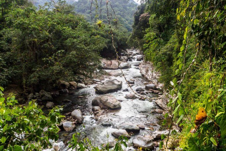 Rainforest near Ciudad Perdida