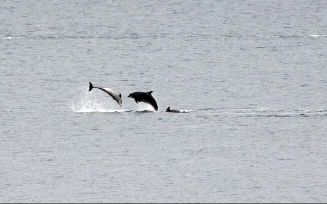 See dolphins in Aberdeen