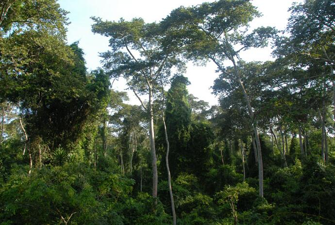 Benin Lama forest