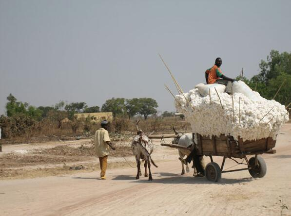 Benin Removal of the cotton harvest