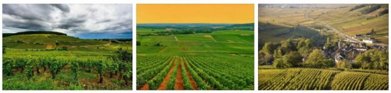 Climats in Burgundy